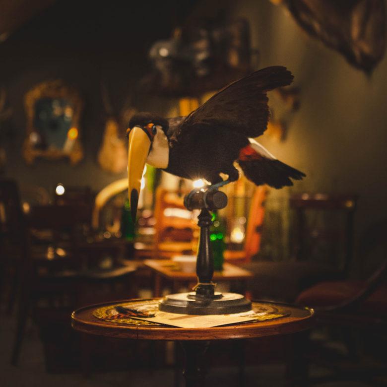 The Last Toucan